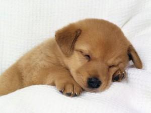 accesorios-perros