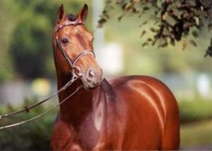 caballo-holstein