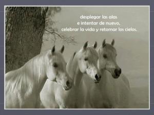 caballos-que-belleza-14-728