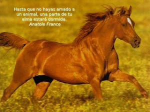 caballos.jpg3_