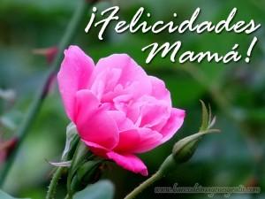 felicidades-mama-rosa-mensaje-10-de-mayo-dia-de-las-madres