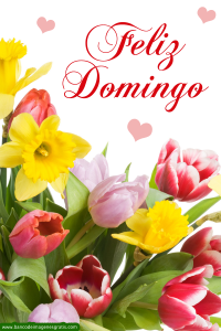 feliz-domingo-mensaje-flores-tulipanes