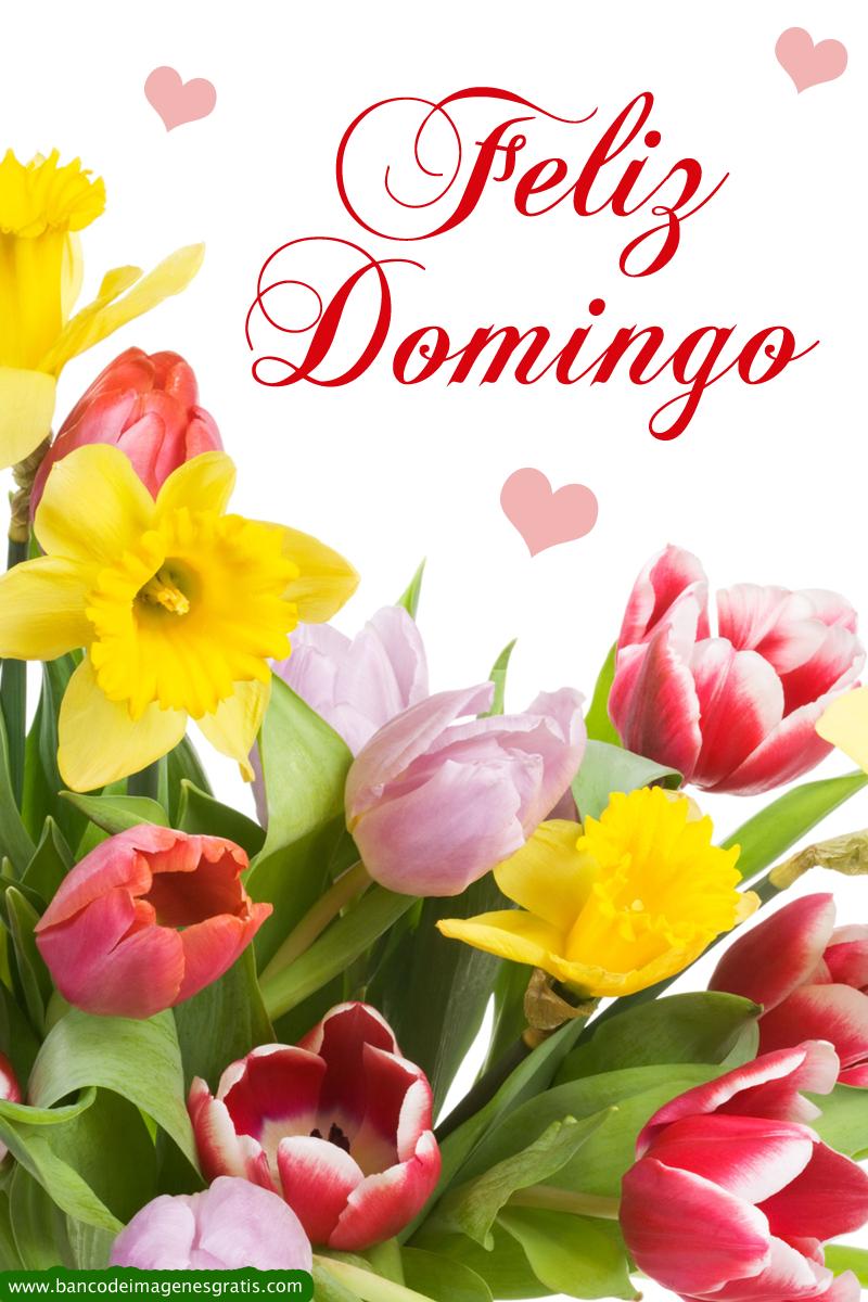 Populares Imágenes de rosas de feliz domingo | Descargar imágenes gratis JF12