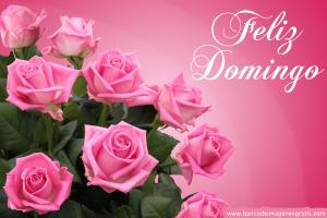 feliz-domingo-rosas-rosas-mensaje