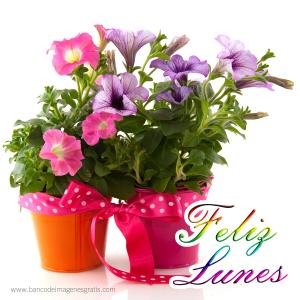 feliz-lunes-canasta-con-flores-arreglos