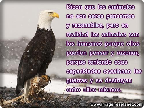 Imágenes de águilas con frases de reflexión