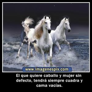 imagenes de caballo con frases de caballo para etiquetar en tu muro
