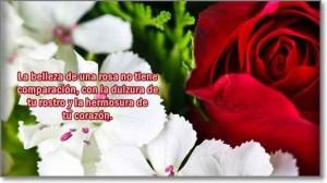 imagenes-de-rosas-con-frases-de-amor-3