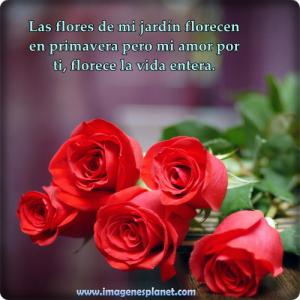 imagenes de rosas con frases romanticas