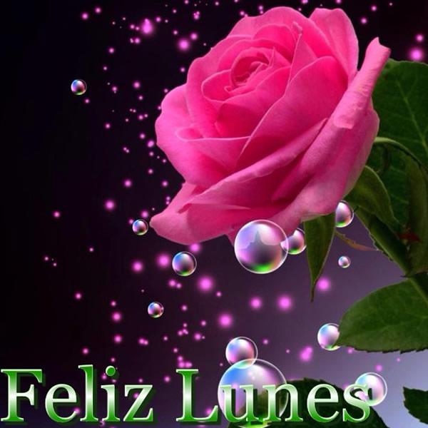 Imágenes De Feliz Lunes Con Rosas Descargar Imágenes Gratis