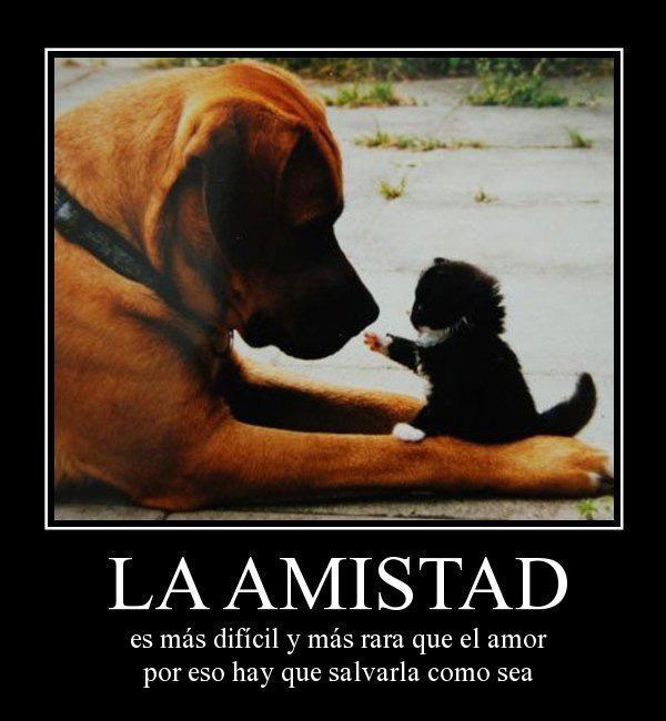 la-amistad-es-mas-dificil-y-mas-rara-que-el-amor-desmotivaciones-de-amistad