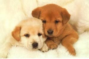 perros-tiernos-5