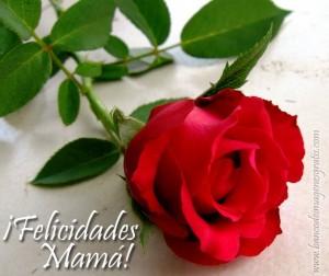 rosa-roja-felicidades-mama-10-de-mayo-dia-de-las-madres