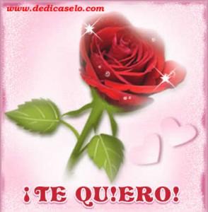 rosa-te-quiero