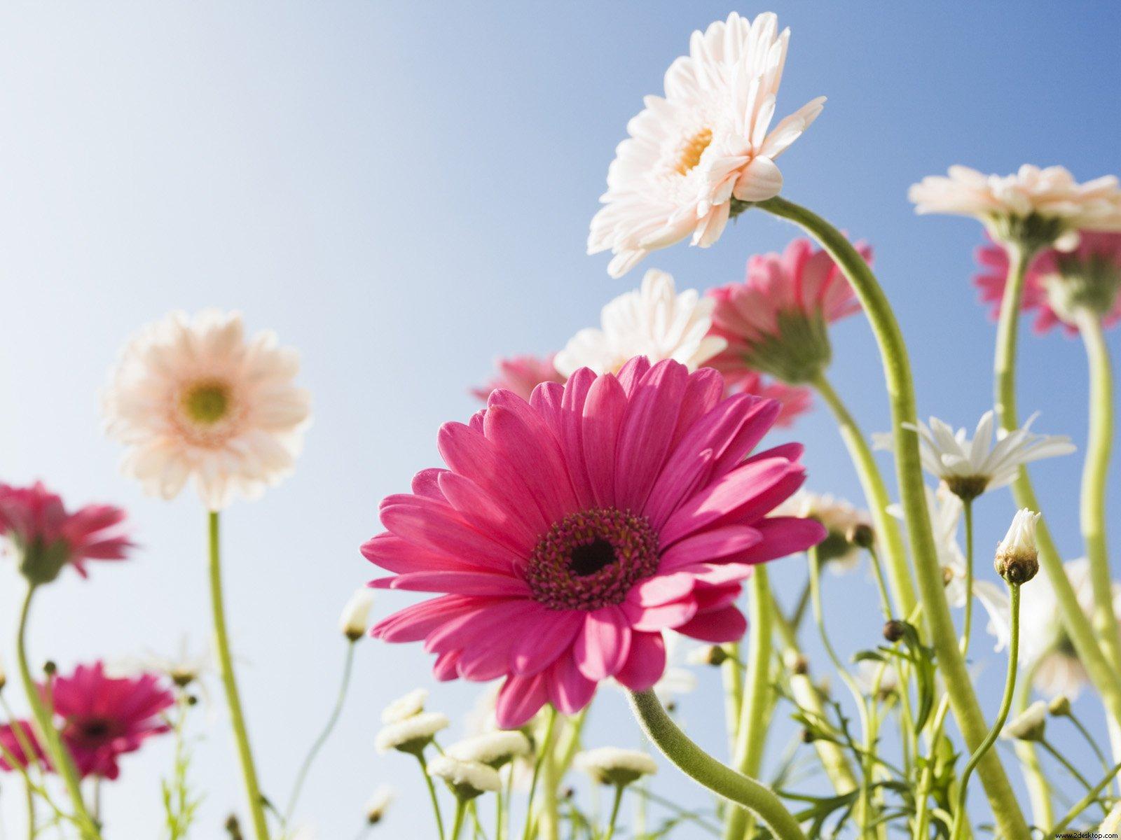 Fondo-de-pantalla-Flores-14
