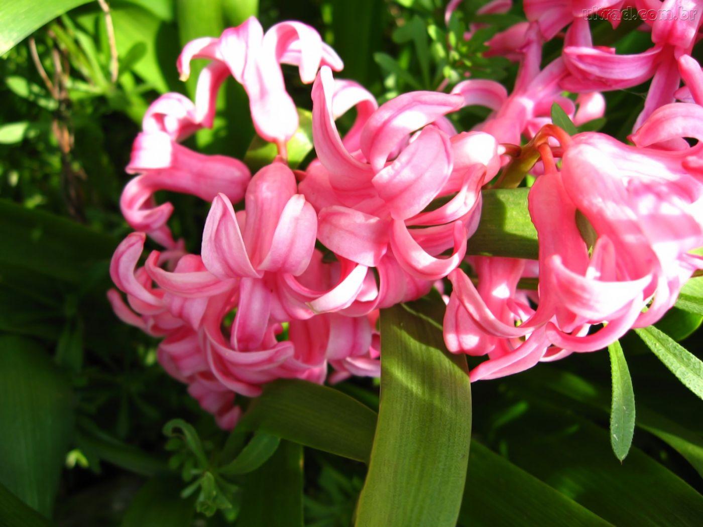 fondo-de-pantalla-flores-1