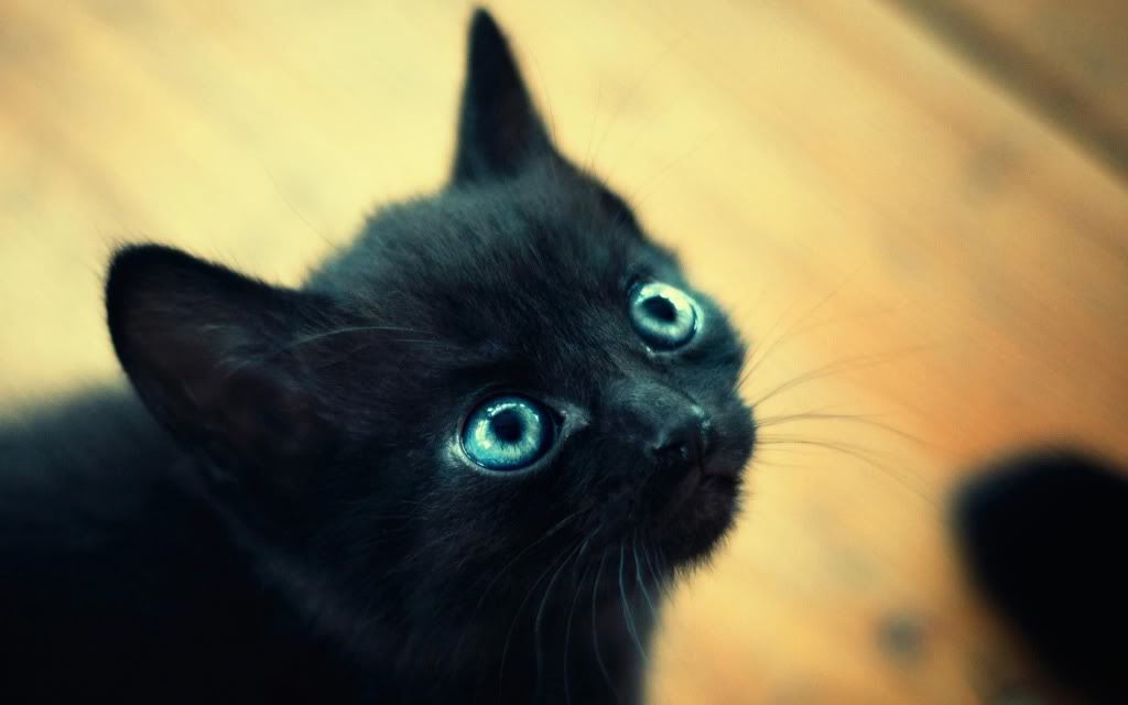 gatito-negro