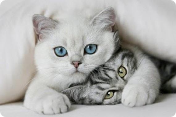 poemas-gatos-e1354145032835