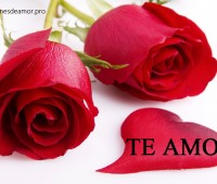 Imágenes de rosas para mi amor