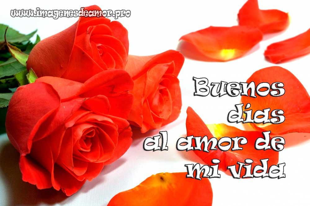 rosas-especiales