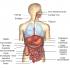 Imágenes de las partes de nuestro cuerpo