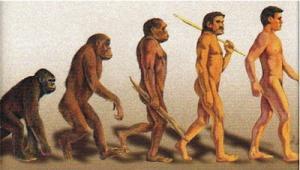 300px-Evolución-lineal