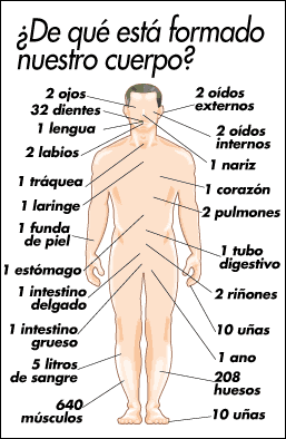 Cuerpo Humano indicando sus partes 1[1]
