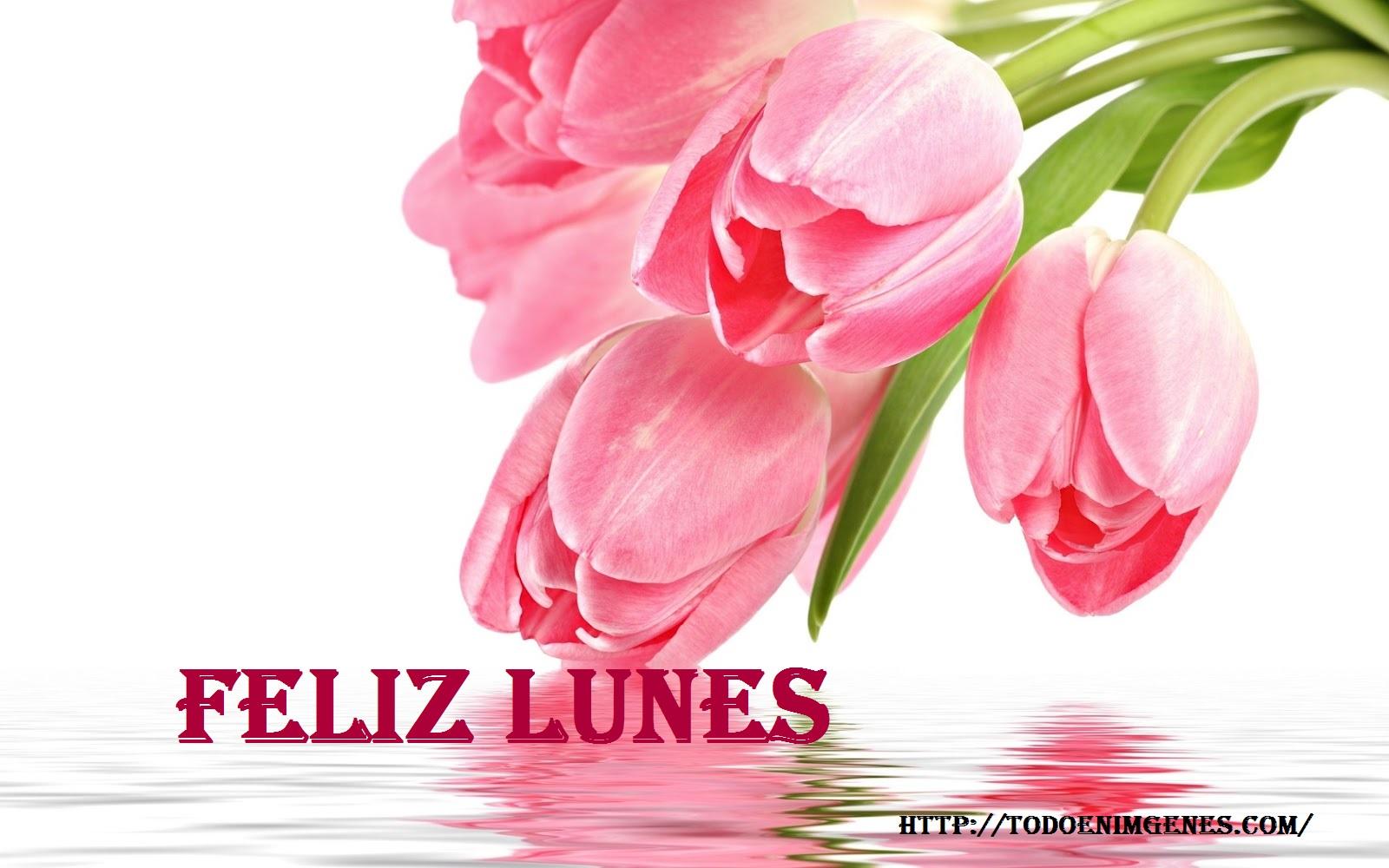 Flowers-pink_tulip_Tulipanes-Rosados