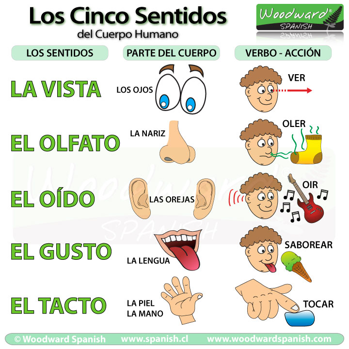 cinco-sentidos-5-senses-spanish