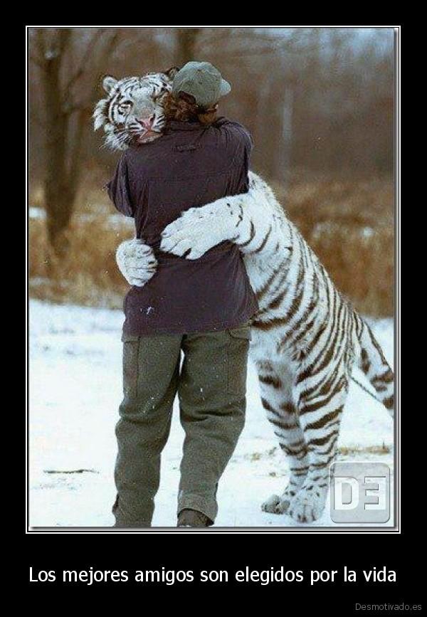 desmotivado.es_Los-mejores-amigos-son-elegidos-por-la-vida-_134843047116