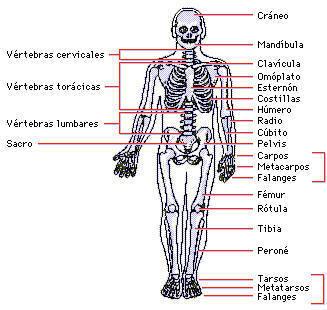 esqueleto (1)