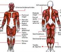 Imágenes de el cuerpo humano y sus partes