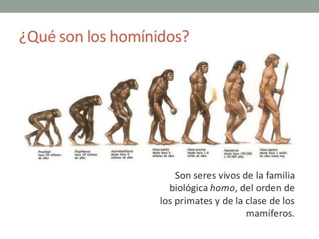 la-evolucin-de-los-hominidos-5-638