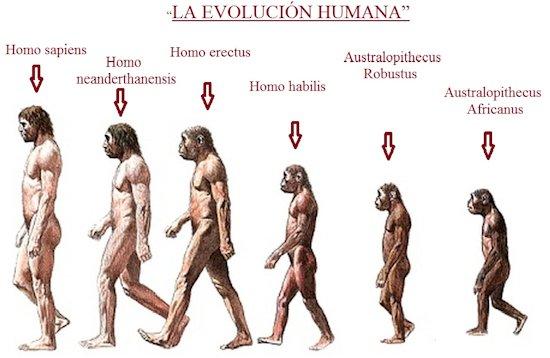 la-evolucion-humana