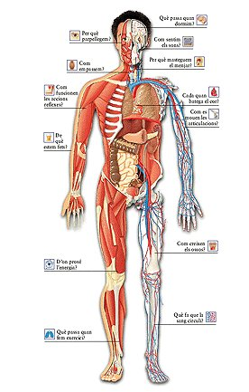 t1_el_cuerpo_humano_z_multi