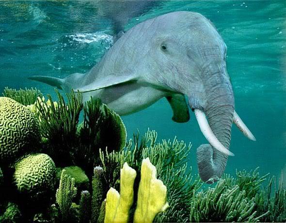 tiburon-elefante