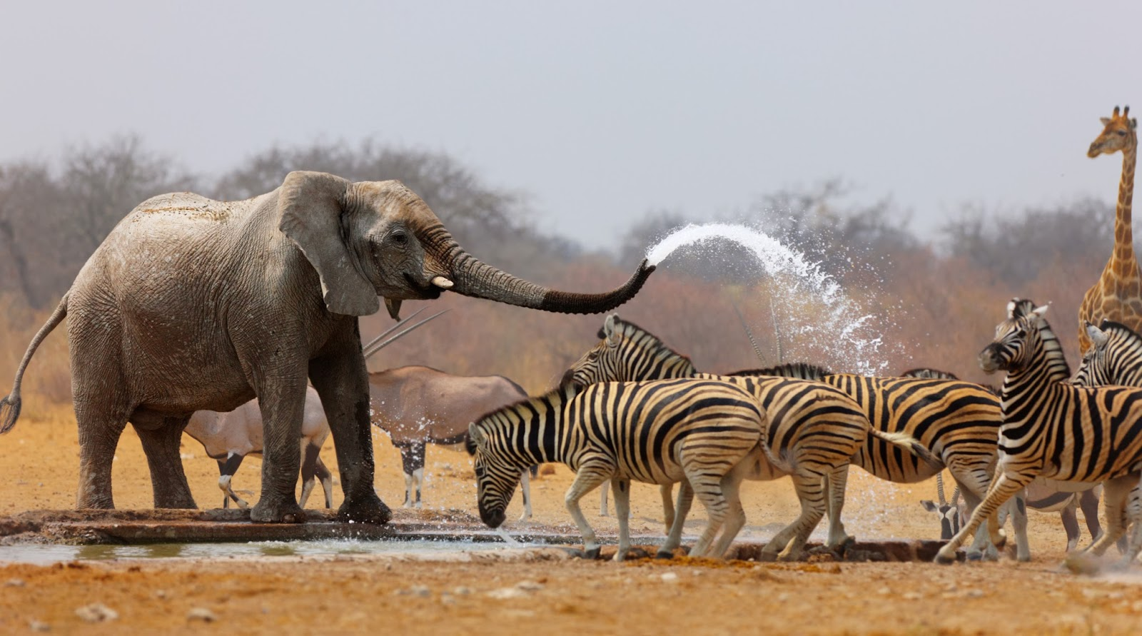 Hermosa-colección-de-animales-diferentes- (4)