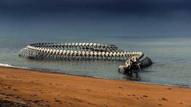 Serpiente-del-océano-3