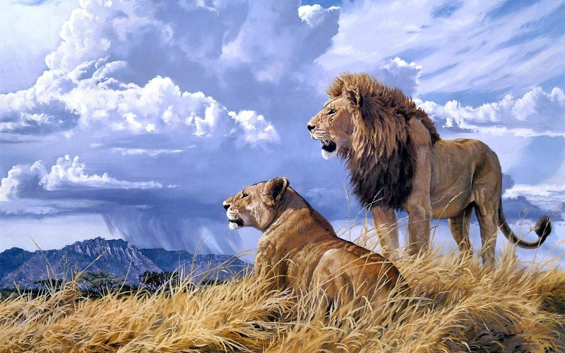 animals-cats-lion-painting-art-landscape-nature-wildlife-africa-grass-predator-couple-love-sky-clouds-rain-weather-photos-wallpaper-71489