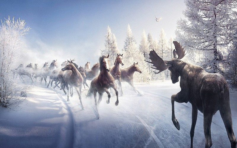 battle-animals-art-paintings-nature-landscapes-winter-snow-trees-horses-moose-images-217713