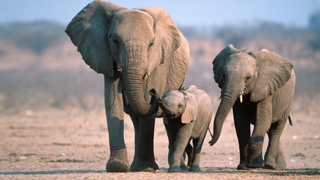 elefantes-especies-naturaleza
