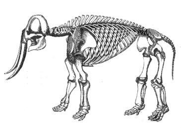 esqueleto-elefante