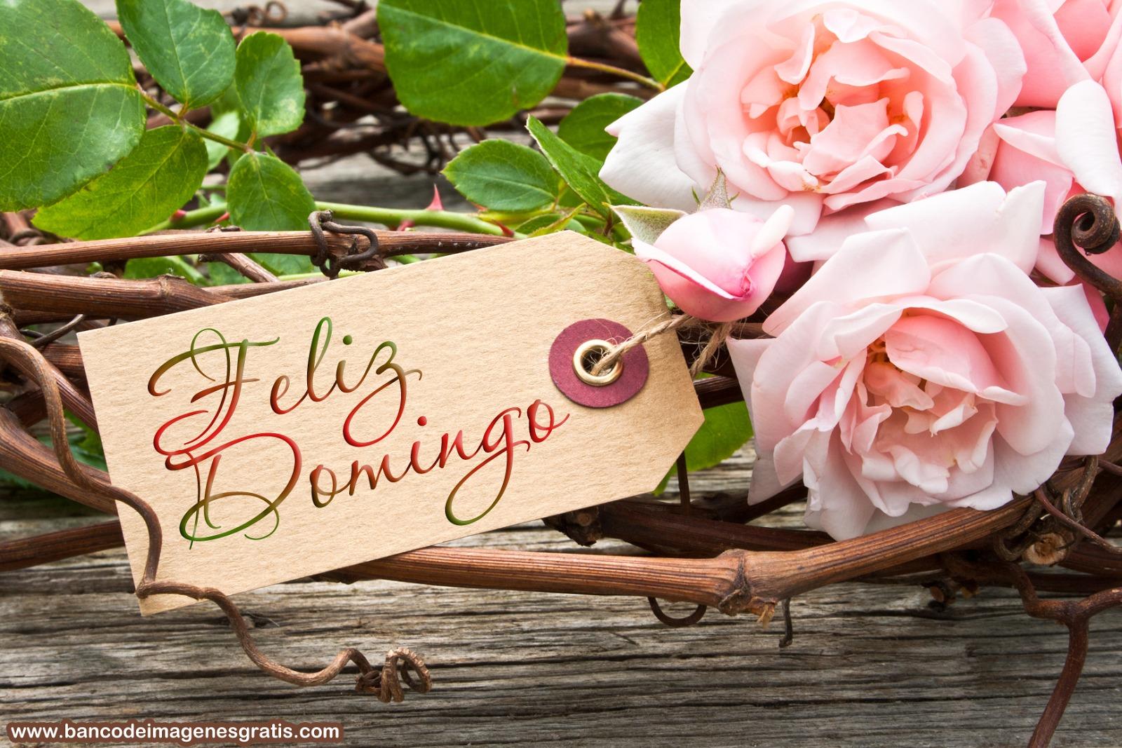 feliz-domingo-rosas-con-mensaje-para-desear-un-feliz-día-en-redes-sociales