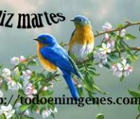 Imágenes de feliz martes con flores
