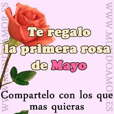 la rosa de mayo