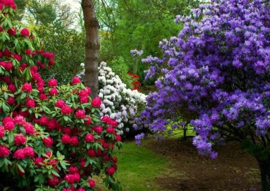 primavera.jpg1_