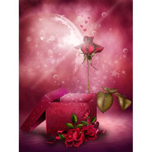 regalo-rosa-fantasia