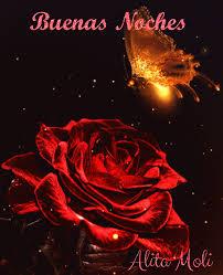rosas de buenas noches