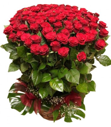 rosas-rojas-503