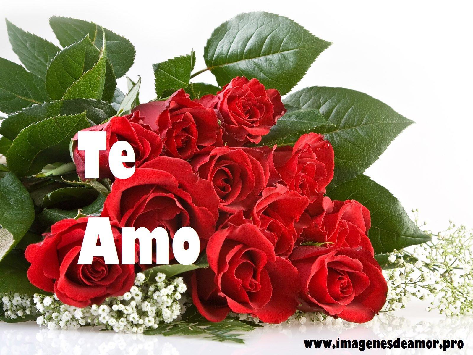 rosas ramo rojo